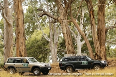 kangaroo_island_designer_tall_timber_600