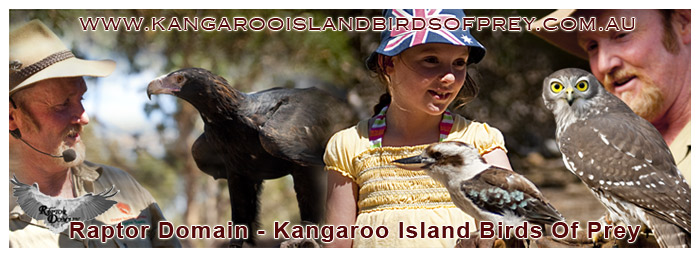 Raptor Domain - Kangaroo Island Birds Of Prey - Kangaroo Island Attraction